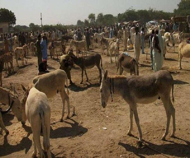 पाकिस्तान ने आर्थिक सर्वेक्षण 2020-21 जारी किया।